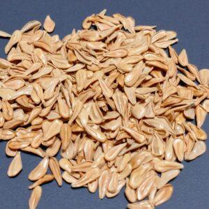 パキポディウム・ウィンゾリーの種子